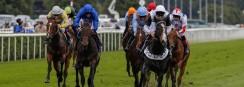 William Hill, sempre presente nas corridas de cavalos: novíssimo patrocinador do Festival da Prata de Northumberland